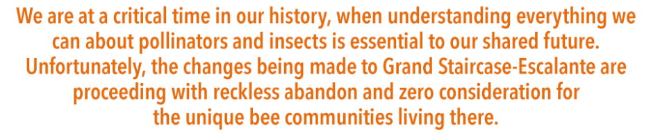 Quote: We are at a critical time in our history, when understanding everything we can about pollinators and insects is essential to our shared future. Unfortunately, the changes being made to Grand Staircase-Escalante are proceeding with reckless abandon and zero consideration for the unique bee communities living there.