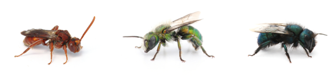 red green blue bees BANNER A