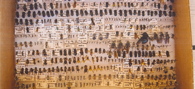 Image of bee collection.