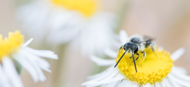 Image of bee on flower.
