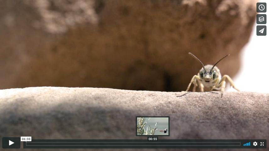 Image of Vimeo screenshot.